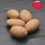 семянной картофель Голандской фирмы ХЗПС